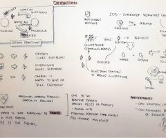 Sketchnotes for Intro to Oxidation